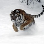 Tiger Tale & Jedemi…
